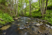 Healthy forest with a stream of water — Stock Photo