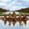 Apollo fountain versailles palace paris — Stock Photo #17835845
