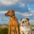 Best friends dogs — Stock Photo #14608791
