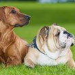 Best friends dogs — Stock Photo #14609339