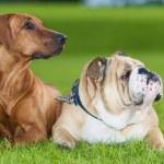 Best friends dogs — Stock Photo