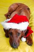 Funny dog in christmas hat waiting for christmas — Stock Photo
