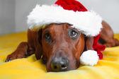 Lustige Hund mit großen Augen in weihnachtsmütze mit auf ein Bett — Stockfoto