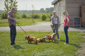 English Bulldog dog puppy owners meeting outdoors — Stock Photo