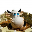 Royalty-Free Stock Photo: Cow face smiling close up