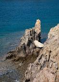 Roca en el agua — Foto de Stock