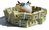 Cow in a pool of banknotes — Stock Photo