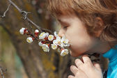 Little cute boy sniffing the flowers blooming apricot in open air — Stock Photo