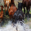Horses running out with splashes of the river to shore — Stock Photo