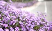 Kwiaty sprng — Zdjęcie stockowe