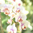 Orchid flower — Stock Photo #28796391