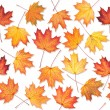 Stock Photo: Seamless texture with maple leaves