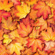 Autumn texture with maple leaves - Stock Photo