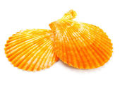 Seashell in close-up isolated on a white — Stock Photo