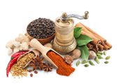 Composition with different spices and herbs isolated — Stock Photo