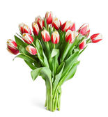 Big bouquet of red tulips isolated on white — Stock Photo