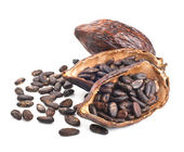 Cocoa pod and beans isolated on a white — Stock Photo