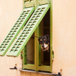 Stock Photo: Dog looking trough window.