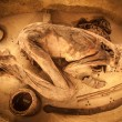 Egyptian mummy - Stock Photo