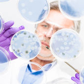 Senior life science researcher grafting bacteria. — Stock Photo