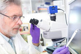 Senior scientist  microscoping in lab. — Stock Photo