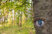 Göz oyma ağaç gövdesi. — Stok fotoğraf