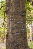 Ojos tallados en tronco de árbol. — Foto de Stock