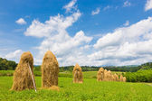 Traditional hay stacks on the field. — Stock Photo