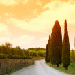 Tuscany pathway — Stock Photo #28093483