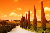 Toscana väg — Stockfoto