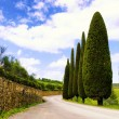 Stock Photo: Country road in Tuscany