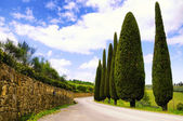 Country road in Tuscany — Stock fotografie