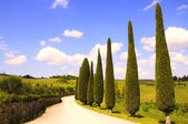 Country road in Tuscany — Stockfoto