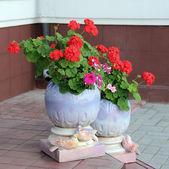 A flowepot with flowers. — Stock Photo