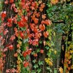In autumn wood. — Stock Photo #13270379