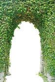 Entrada de hierba verde aislada. — Foto de Stock