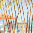 Stock Photo: Watching summer behind palm leaves