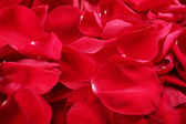 Macro shot of background of red rose petals — Stock Photo