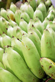 Green bananas — Photo
