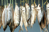 Milkfish is being hung in the drying process — 图库照片