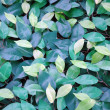 Green leafs background — Stock Photo