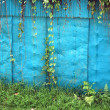 Old blue iron wall with creeping weeds - Stock Photo
