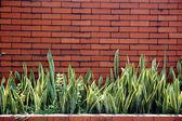 Mur z cegły z roślin ozdobnych — Zdjęcie stockowe