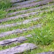 Stock Photo: Curvaceous foothpath made of concrete blocks across grass
