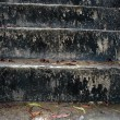 Concrete stairs slick and mossy - Stock Photo