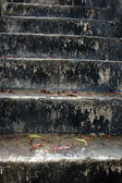 Concrete stairs slick and mossy — Stock Photo