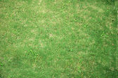 Field of green grass — Stockfoto