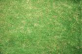 Field of green grass — Stock Photo