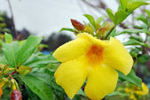 Beautiful yellow flower — Photo