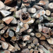 Pile of firewood — Stock Photo #13961279